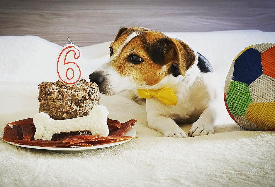#PetBirthday – Capture your pet birthday and get rewarded