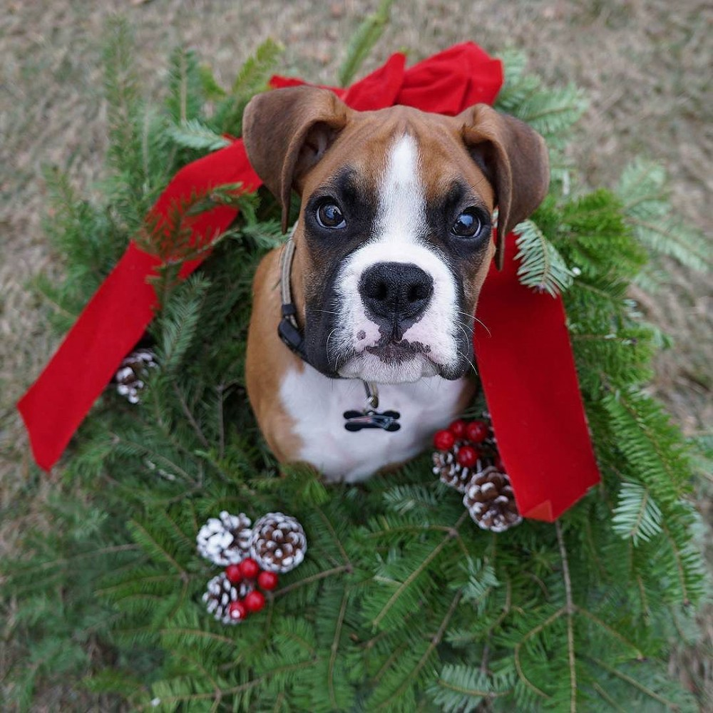 Winner of #XmasPet competition and other heart melting entries